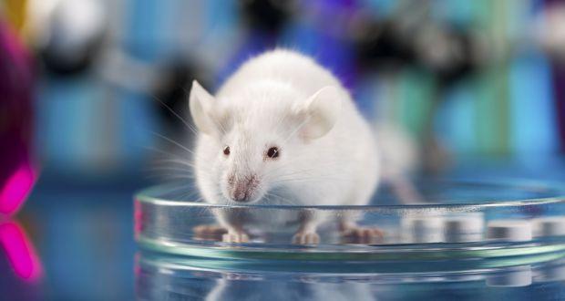 चीन में पहली बार जीन एडिटिंग से वैज्ञानिकों ने पैदा की दो चुहिया की संतान
