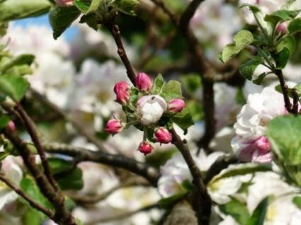 हिमाचल प्रदेश: बागवानों को मिली राहत, कीटनाशकों की दुकानें रहेंगी खुली